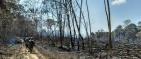 Los seis incendios forestales que encienden alarmas en Guaviare